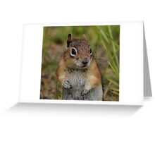 Such A Little Cutie Greeting Card