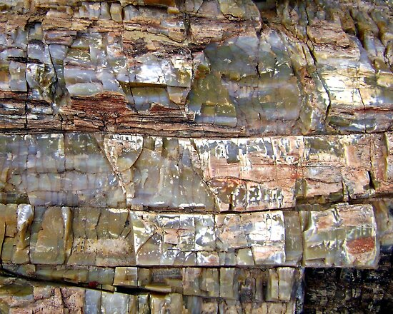 Petrified Wood Patterns by Dana Roper