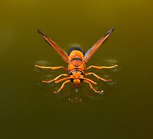 Who's a pretty wasp then by burnettbirder