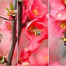 Bees at work by Malcolm Garth