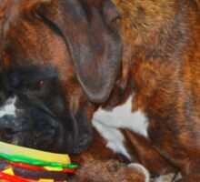 Mine! -Boxer Dogs Series- Sticker