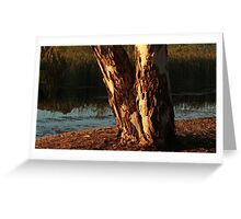 Glowing tree trunk Greeting Card