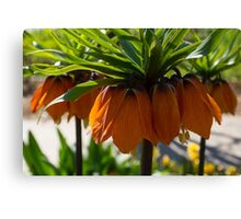 Crown Imperial Flowers Canvas Print