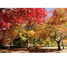 Autumn Landscape4 Photographic Print
