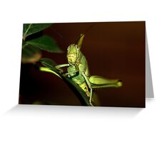 The orthopteron Greeting Card