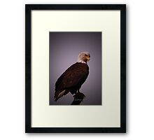Eagle Eye Framed Print