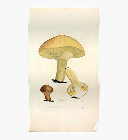 Coloured figures of English fungi or mushrooms James Sowerby 1809 0753 Poster