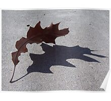Shadow of a Leaf Poster