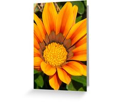 Flower in the garden. Greeting Card