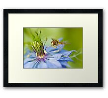 Love-in-the-mist lunch Framed Print