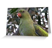 Regent Parrot Portrait Greeting Card