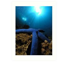 Blue starfish from the great barrier reef Art Print