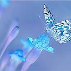 Magic Butterfly by Mark Walton