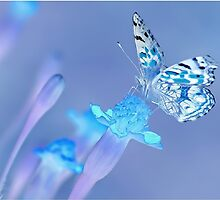 Magic Butterfly by Mark Walton