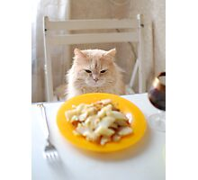 cat sitting at the laid table Photographic Print