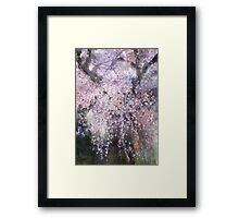 The droop cherry blossoms...「youen」 Framed Print