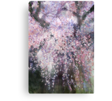 The droop cherry blossoms...「youen」 Canvas Print