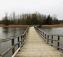 Boardwalk by Debbie Oppermann