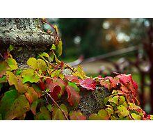 Botanic Photographic Print