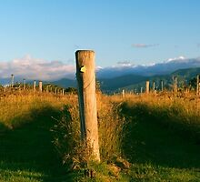 Outback mountain and vineyard in the Scenic Rim, Queensland. by Rob D