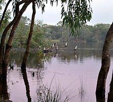 Cormorants by Lozzar Landscape