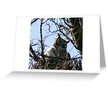GREAT HORNED OWL AND BABY Greeting Card