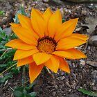 Orange Flower by KarenSLJohnson