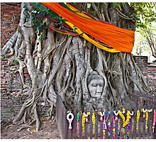 Buddha in the Banyan Tree Photographic Print