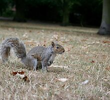 Squirrel by astonesthrow