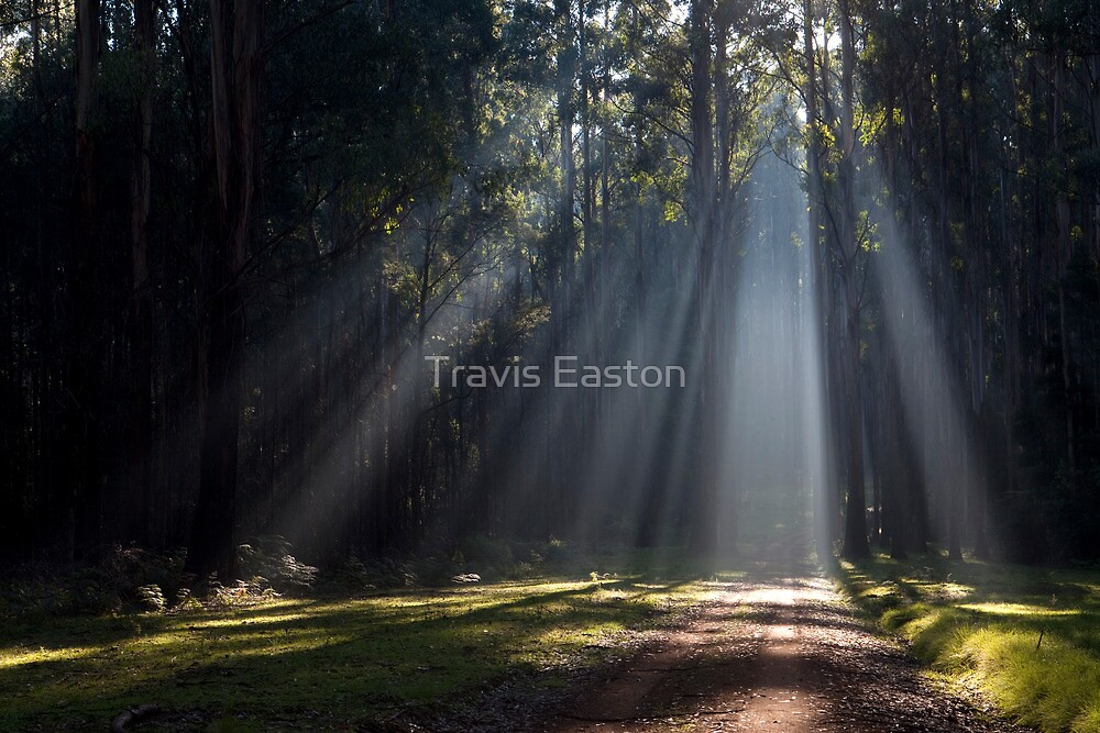 I see the light... by Travis Easton