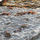 Seaweed on fire, sunset, Main Break, Margaret River, WA by ladieslounge