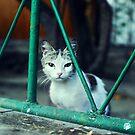 cat behind bars by Iuliia Dumnova