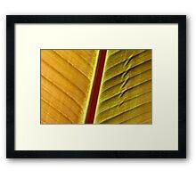 bronze leaf Framed Print
