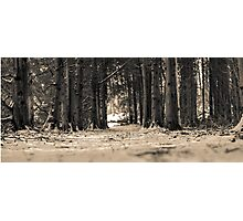 Forest corridor perspective  Photographic Print