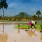 Cultivation of Rice. by Mukesh Srivastava