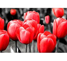 Abstract Pink Tulips Oil Painting Photographic Print