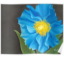 """Asian Blue,"" 10"" x 8"" Soft Pastel on Pastelbord. Himalayan Blue Poppy with Bright Orange & Yellow Center Poster"