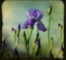 Iris by gothicolors