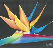 """Flight to Paradise,"" Soft Pastel on Pastelbord, 10"" x 8"" - Bright, Beautiful Bird of Paradise on Black Background by Laura Bell"