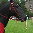 Warrior Horse by Dawn B Davies-McIninch