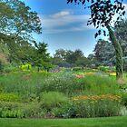 Flowers - Bressingham Gardens by Phil Rhodes