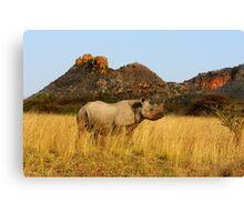 BLACK RHINO - SOUTH AFRICA Canvas Print