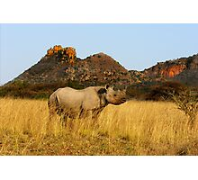 BLACK RHINO - SOUTH AFRICA Photographic Print