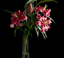 Lily flower by Vanger