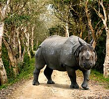 INDIAN RHINO - KAZIRANGA by Michael Sheridan