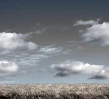 Sky and Grass - Hogganfield Loch, Glasgow, Scotland, UK by simpsonvisuals