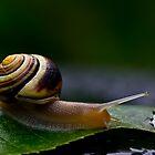 Snail by LeeAnne Emrick
