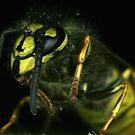 Mr Wasp by Ian Chapman