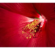 Inside the Petals Photographic Print