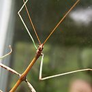 Walking Stick by AlGrover